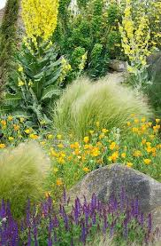290 best breathtaking plant combinations images on