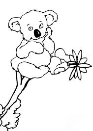 free koala colouring kids activity sheets kid