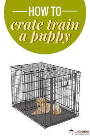 crate training how to crate train a puppy day night even if you work