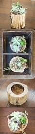 Unique Planters For Succulents by 936 Best Crazy Ideas For Planters Images On Pinterest Gardening