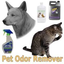 Remove Cat Urine From Sofa Remove The Smell Of Cat Or Dog Urine From Upholstery Dog Urine
