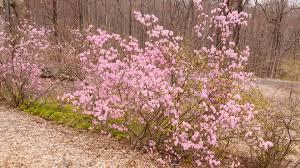 tree or shrub archives page trees u0026 shrubs u2013 land designs unlimited llc