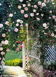 Plants For Pergolas by Monty Don Pergolas Arches Trees Even The Side Of The House