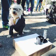 Dogs Halloween Costumes Pictures Ira Glass Dog Amazing Dog Halloween Costume