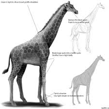 making a giraffe drawing tips and tricks for learning how to draw
