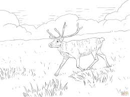 finnish forest reindeer coloring page free printable coloring pages