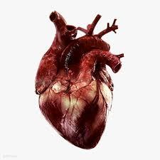 Sheep Heart Anatomy Quiz Derosa Science Assign A U0026p Mp3