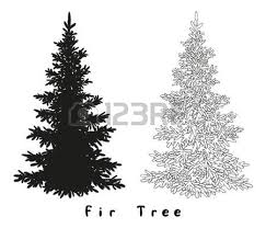 spruce fir tree black silhouette contours and