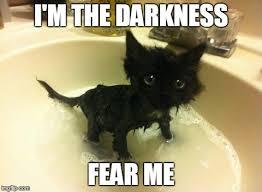 Funny Memes Cats - funny cat memes home facebook