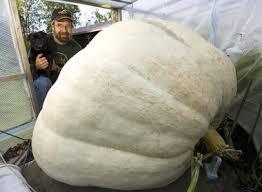 white pumpkins color monday the of white pumpkins kitchen colors