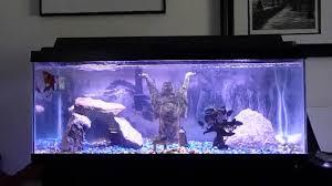 zen aquarium