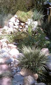 native pond plants ponds wilson environmental contracting