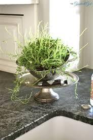 77 best gardening images on pinterest gardening diy and gardens