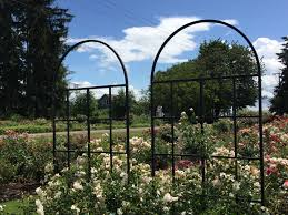 how to build a trellis archway rose growing u0026 care u0027how to u0027 articles pick a proper trellis