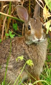 hopperhome bunny blog july 2010