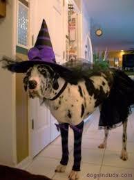 Dog Halloween Costumes 533 Halloween Pets Images Animals Costume