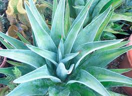 california native plants landscaping landscape design u0026 california u201cmust haves u201d studio one eleven