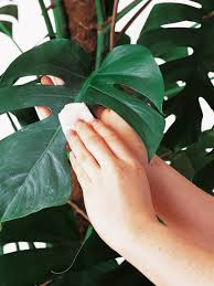 Best Houseplants Home Design Indoor Plants Low Light Common Houseplants And Best