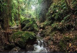 jungle backdrop jungle safari tree forest leaf photography studio background vinyl