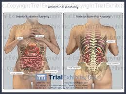 3d Human Anatomy Human 3d Human Anatomy Diagram Abdomen Anatomy Anatomy Of The