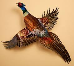 ringneck pheasant metal wall art wild wings