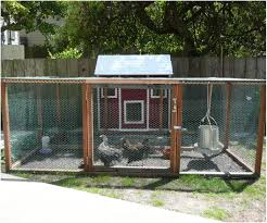Backyard Chickens For Beginners by Backyards Compact Full Image For Heat Lamp Chicken Coops Keeping