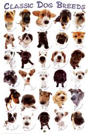Types Of Dogs Nature Picture Selection Types Of Dogs