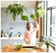 indoors garden grow an herb garden indoors exhort me