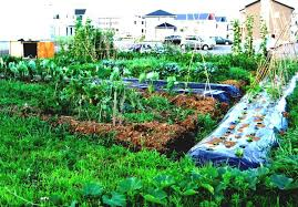 small kitchen garden ideas easy vegetable garden design ideas with small vegetable garden and