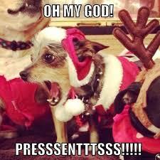 Christmas Dog Meme - christmas dog meme 59d2f8869aae2 jpg vevmo