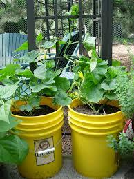 apartment gardening growinggardens u0027 blog