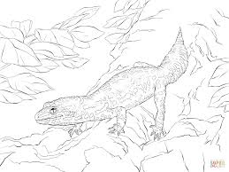 realistic leopard gecko coloring page free printable coloring pages