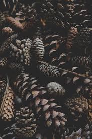 pattern photography pinterest 250 best autumn images on pinterest autumn leaves fall leaves and