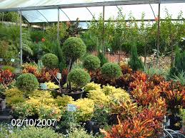 florida landscape shrubs design home ideas pictures homecolors