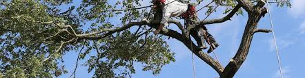 is your tree care provider insured inexpensive tree care