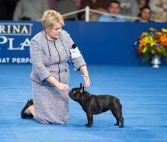 the terrier wins best in show at the 2015 national