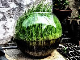 free images tree plant leaf bowl backyard soil botany