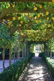 best 25 covered walkway ideas on portland
