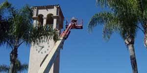 180 swarm removal los angeles bee removal fast local bee service
