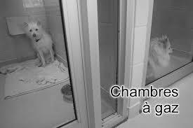 gaz chambre à gaz animaux de compagnie euthanasie de chiens et chats chambres à gaz