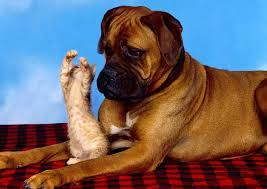 boxer dog youtube 35 funny animal videos on youtube best of 10 yrs freemake