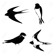 Barn Swallow Tattoo Designs Images For U003e Swallow Tattoo Silhouette Personal Interest