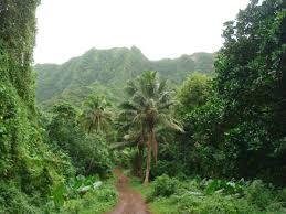 file rarotonga forest track jpg wikimedia commons
