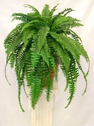 best plants to grow indoors for cleaner air