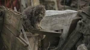 Monkey Bench Free Stock Video Of Animal Pet Bench