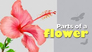 Where Is The Pollen Produced In A Flower - parts of a flower and their functions biology mocomi kids