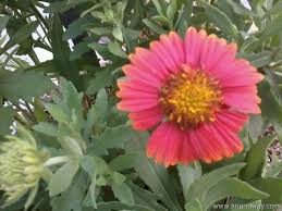 Summer Garden Plants - sun tolerant flowering plants in north indian summer garden