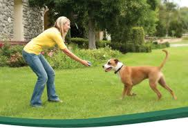 Can You Bury A Dog In Your Backyard Wireless Pet Fence Wireless Dog Fence U0026 Containment