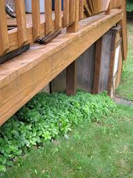 Backyard Ground Cover Ideas by Exterior Design Natural Green Pachysandra Ground Cover For Your