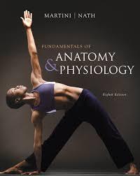 Human Anatomy Textbook Pdf Martini Nath U0026 Bartholomew Fundamentals Of Anatomy U0026 Physiology